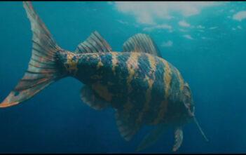"""Ταινία Μικρού Μήκους: """"Jonah"""""""