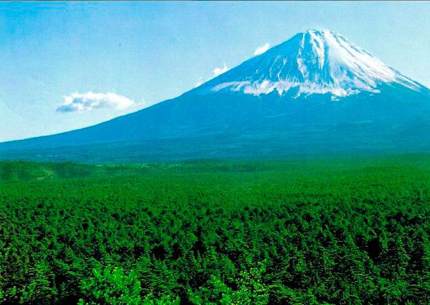 Aokigahara Forest , Mount Fuji - Japan