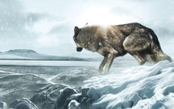 """Πρώτο Trailer Απο Το """"Wolf Totem"""""""