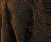 Πρώτο Trailer Απο Το «Dumbo»
