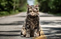 """Πρώτο Trailer Απο Το Remake Του """"Pet Sematary"""""""