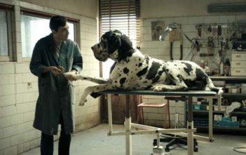 "Trailer Απο Το ""Dogman"""