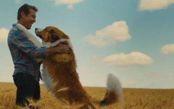 """""""A Dog's Journey"""""""